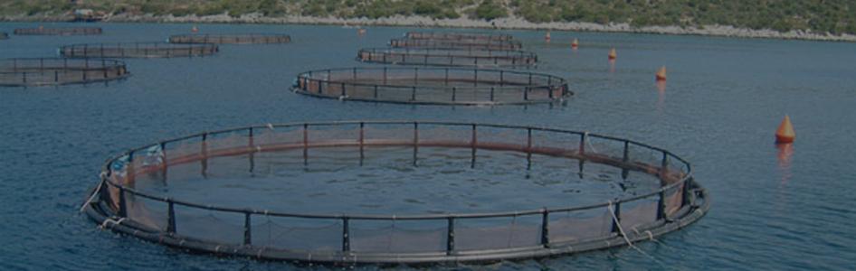 В Госдуме обсуждают меры совершенствования госрегулирования в сфере аквакультуры