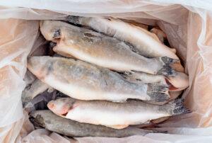 fishproekt_12
