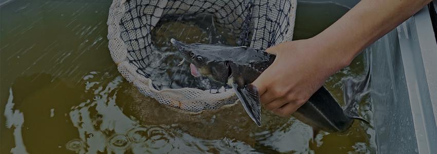 Подозреваемых в ловле краснокнижной рыбы задержали в Краснодарском крае