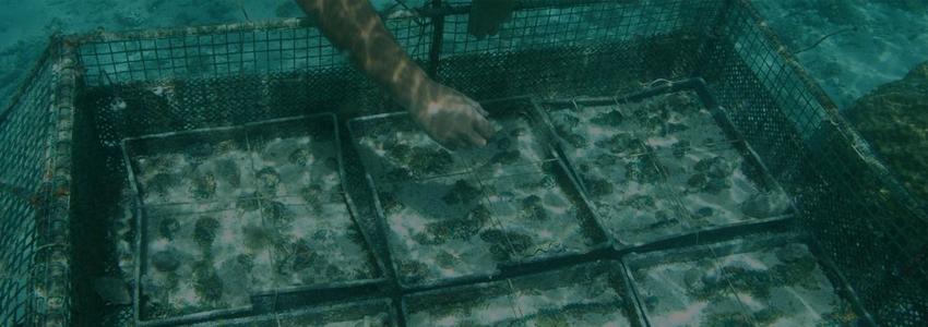 В Приморье прорабатывают меры защиты участков марикультуры от браконьеров