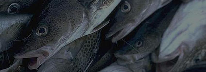 Минсельхоз собирается оптимизировать сборы в рыбохозяйственном комплексе страны