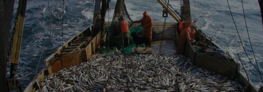 Илья Шестаков озвучил предложения по развитию рыбохозяйственного комплекса РФ
