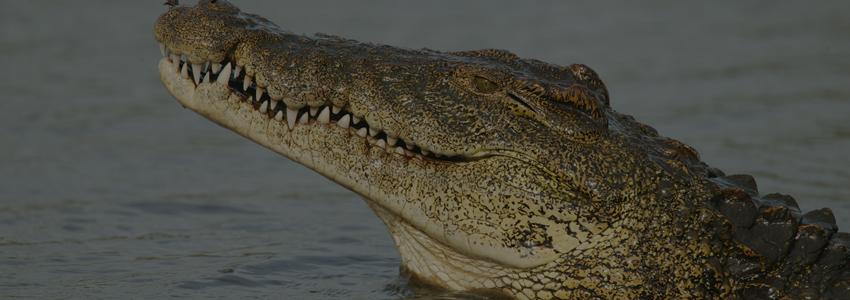 Австралийский рыбак провел два дня среди крокодилов, не покинув свое дорогое судно
